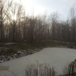 Matlovich Property Wetland